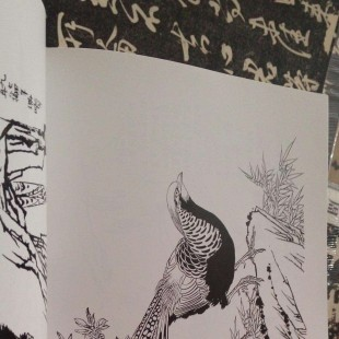 孙其峰先生的一些白描(注意爪子,画的特别好)